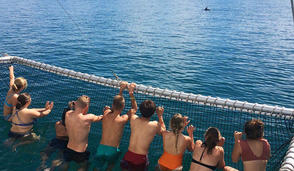 Aussie Adventure Dolphin Watching Cruise Beach Vibes Epic Adventure in Australia Work and Travel Down Under Workaway during your Gap Year Australia Working Holiday Adventure Grabatour Travel
