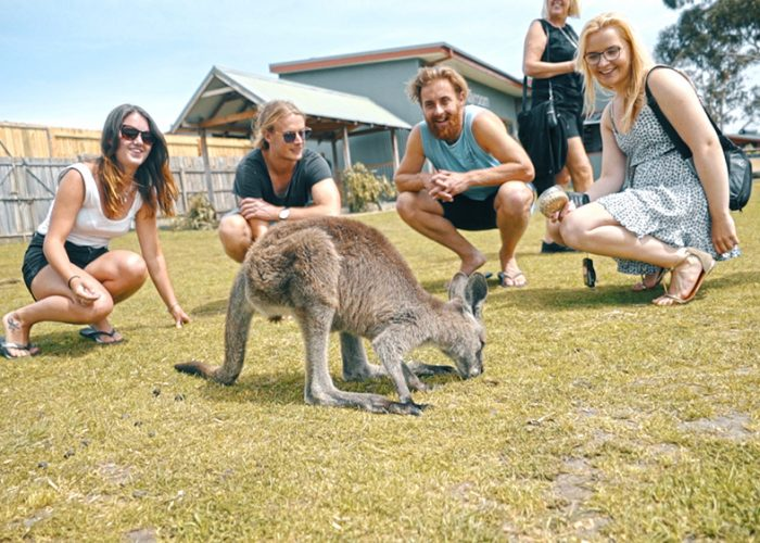 Gap-Year-Australia-Melbourne-Gap-Year-Oz-Paid-Work-Grabatour-Travel-Kangaroo-Group-Shot-Phillip-Island-Welcome-To-Travel-Melbourne