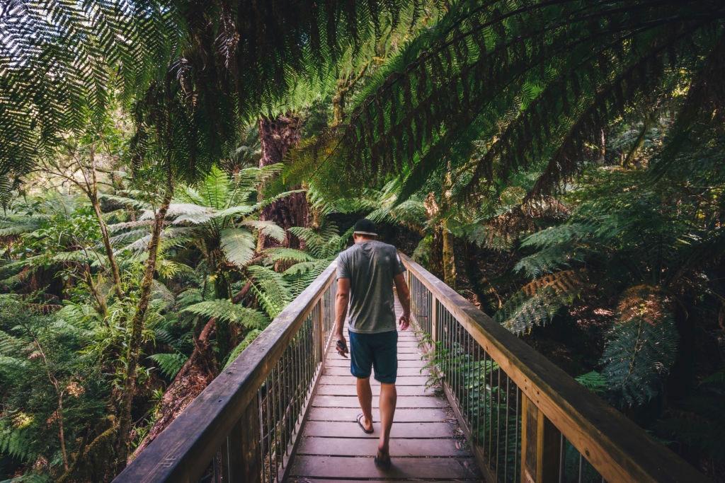 Australia-Wildlife-Great-Ocean-Road-Beauchamp-falls-Great-Ocean-Road-Trip-South-Australia-Iconic-12-Apostles-towering-Melbourne-Travelling-in-Melbourne-Australia-Working-Holiday-Grabatour